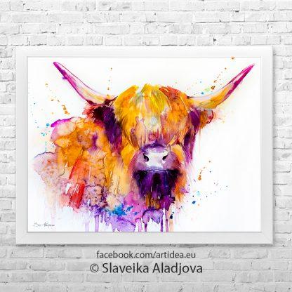 картина на шотландска крава