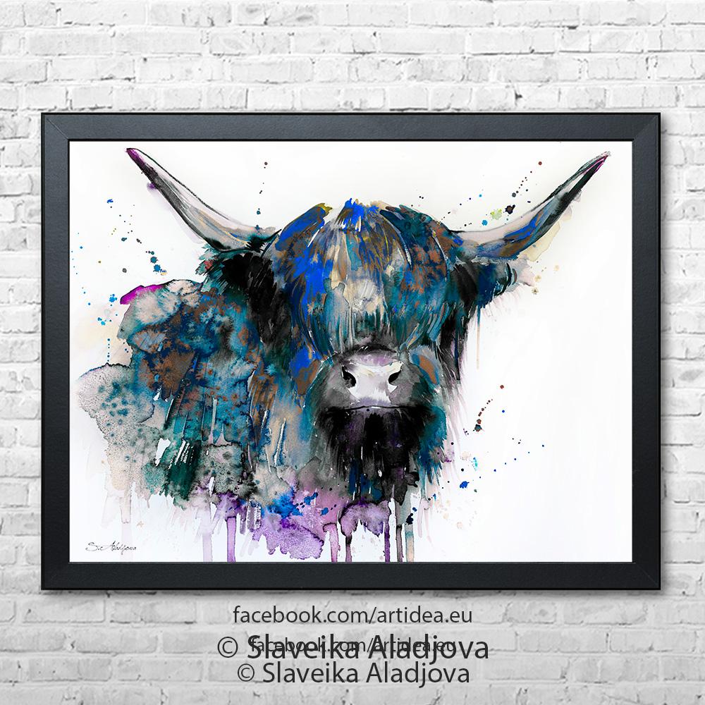 шотландска крава