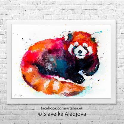 червена панда 2