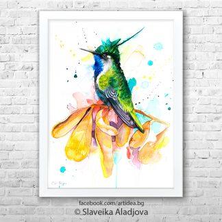 картина колибри златен коронован смарагд