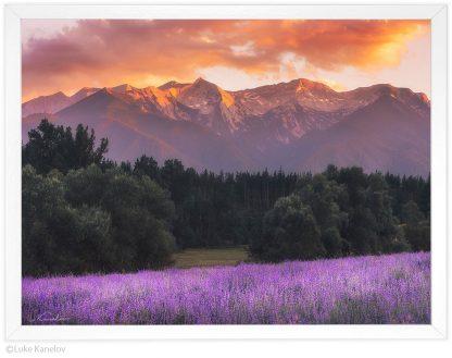 Пейзажна фотография - Лавандула в Пирин по залез