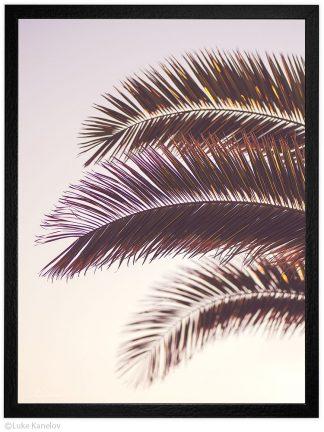 Декорация за дома, принт с палма, фотография