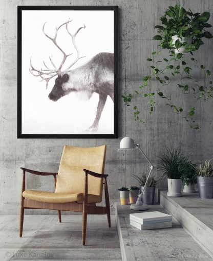 Арт фотография, Северен елен