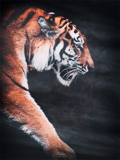 Арт фотография с тигър