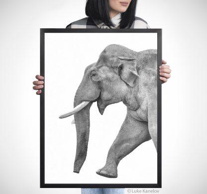 Арт фотография с азиатски слон