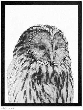 Арт фотография, Черно-бяла сова