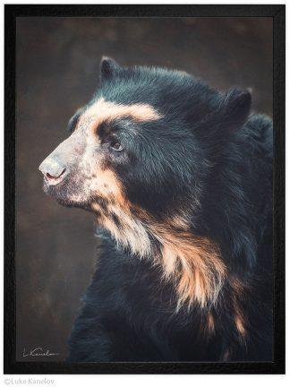 Арт фотография, Очилата мечка