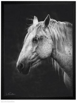 Арт фотография, Черно-бял кон