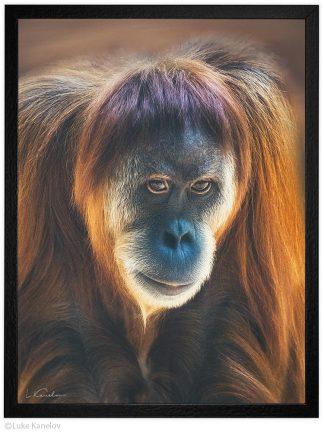 Арт фотография, Суматрански орангутан
