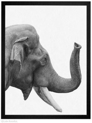Арт фотография черно-бял слон портрет