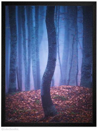 арт фотография дърво в мъглива гора