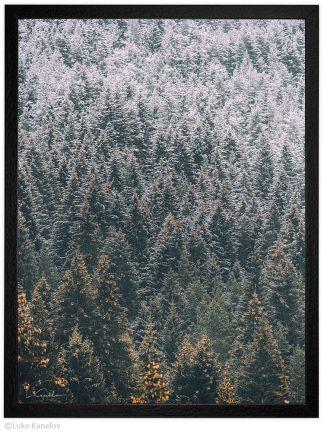 планинска фотография първи сняг над борова гора
