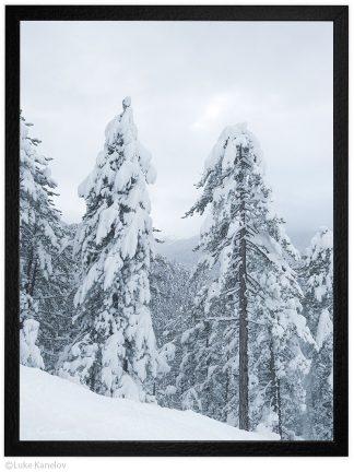 зимен пейзаж заснежени дървета в планината
