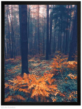 есенен пейзаж папрат в гората
