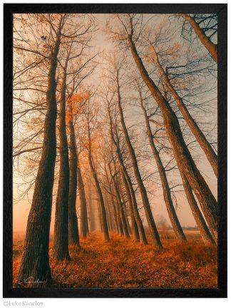 есенни дървета пейзажна фотография