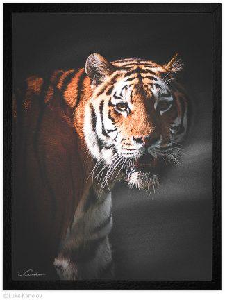 Арт фотография, Сибирски тигър