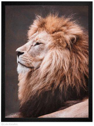 Арт фотография, Лъв