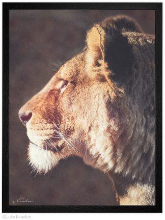 Арт фотография, Лъвица портрет