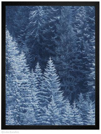 заснежена борова гора зимен пейзаж в пирин