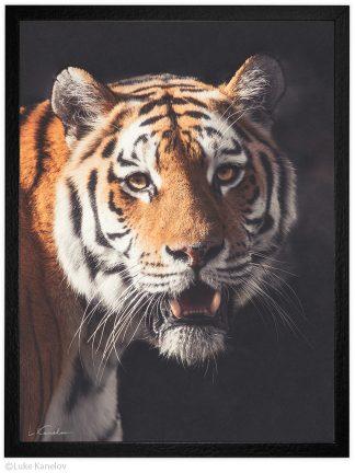 Арт фотография, Тигър портрет