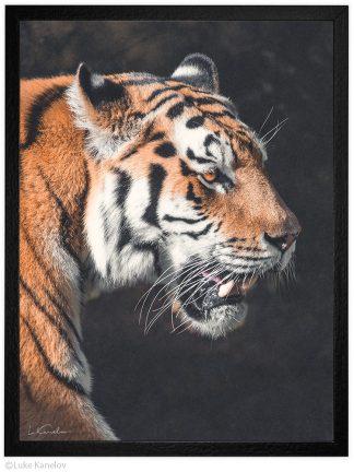 Тигър, Арт фотография