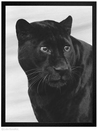 Черна пантера, Арт фотография