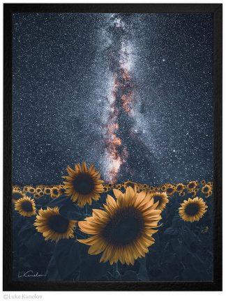 арт фотография слънчогледи под звездите
