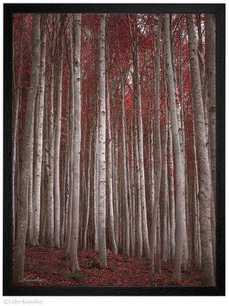 есенна гора пейзажна фотография