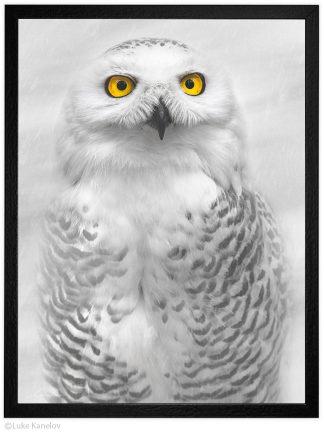 Арт фотография, Снежна сова