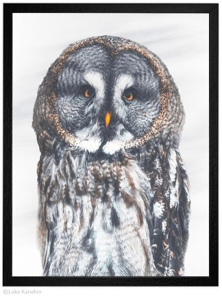 Арт фотография голяма сива сова