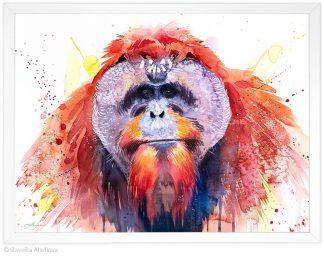 Борнейски орангутан, акварелна картина, художник Славейка Аладжова SA236